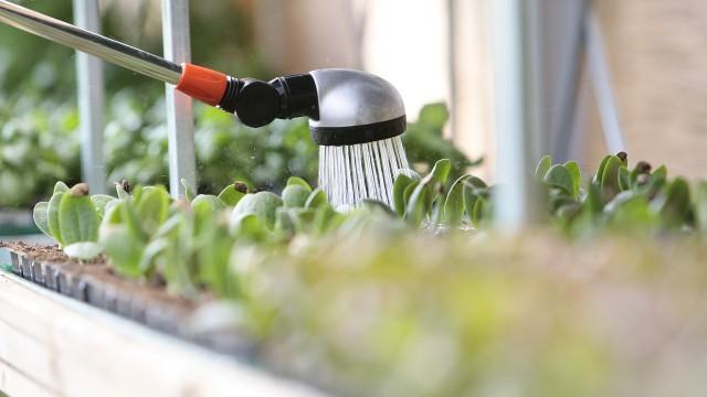 Vivaio a casa tua un nuovo sito targato wordpress for Annaffiare le piante