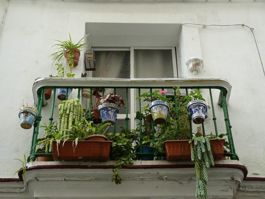 piante balcone 1